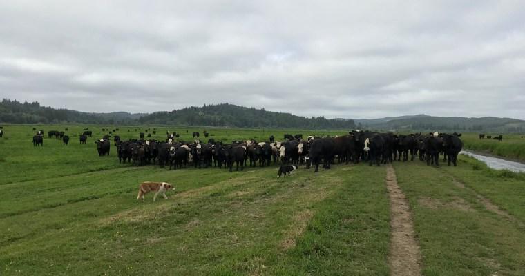 Ranching vs Hunting-Gathering, Part I