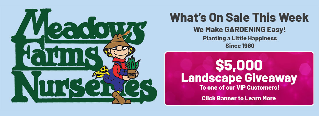 Meadows Farms Nurseries. What's On Sale This Week. We Make GARDENING Easy! Planting a Little Happiness Since 1960. $5,000 Landscape Giveaway to one of our VIP customers. Click banner to learn more.