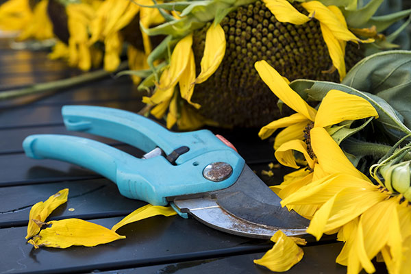 Pruners with flowers