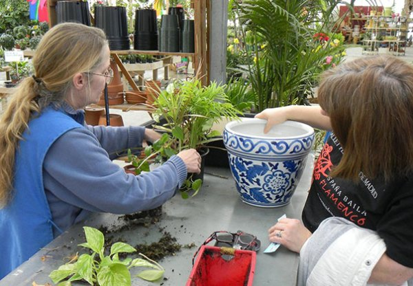 Repotting Houseplants in The Winter - Meadows Farms