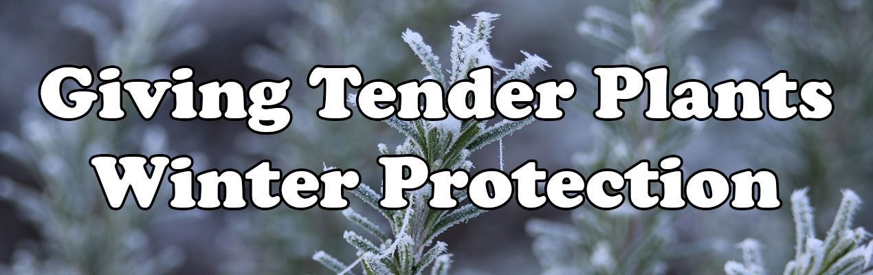 Giving Tender Plants Winter Protection