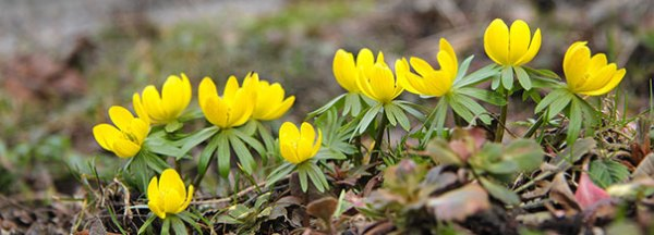 Winter Blooming Plants For The Mid Atlantic Meadows Farms