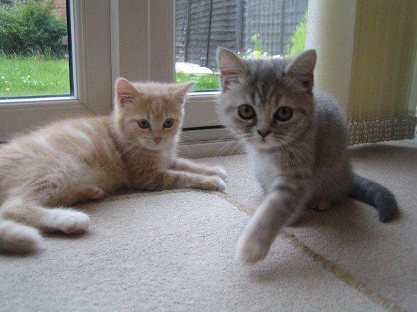 fur babies kittens cats mummy blogger