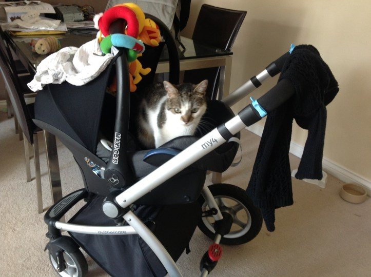 having a baby when you have cats cat kitten pets how to handle babies and pets