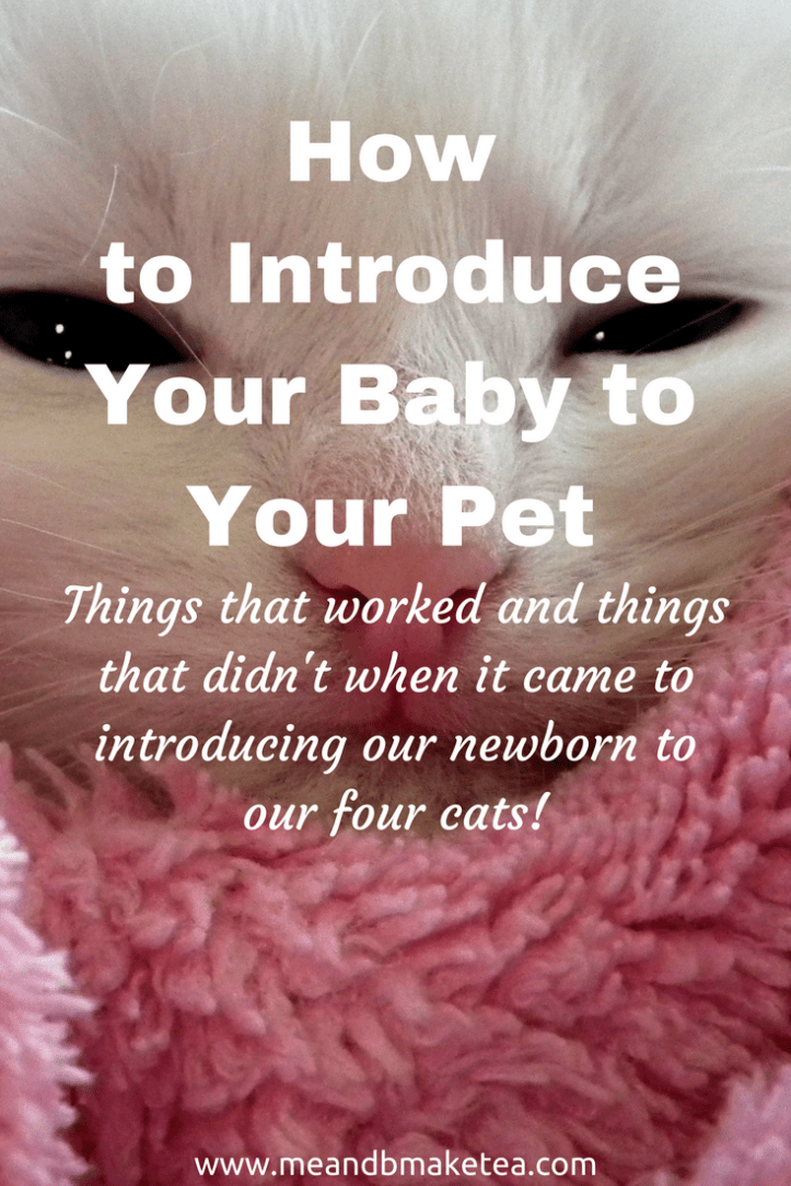 how to Introduce your Baby to Pets like Cats and Dogs