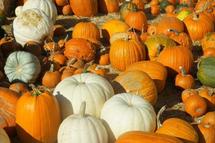 pumpkin patch ideas for half term holidays