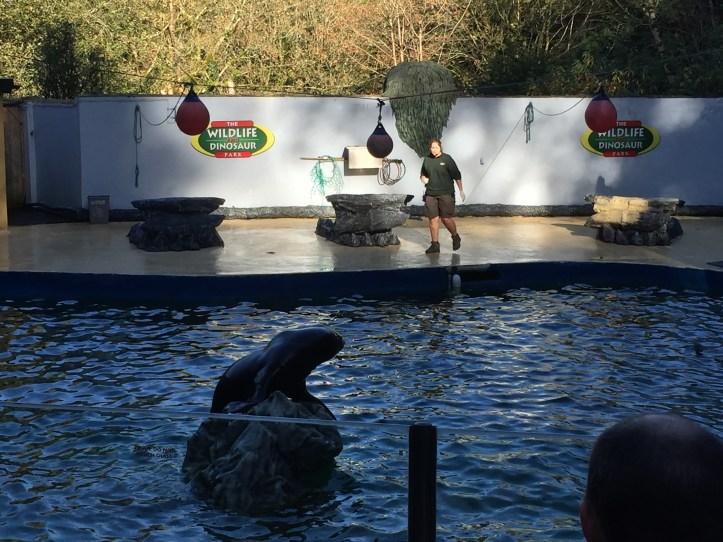 coombe martin wildlife park sealion show