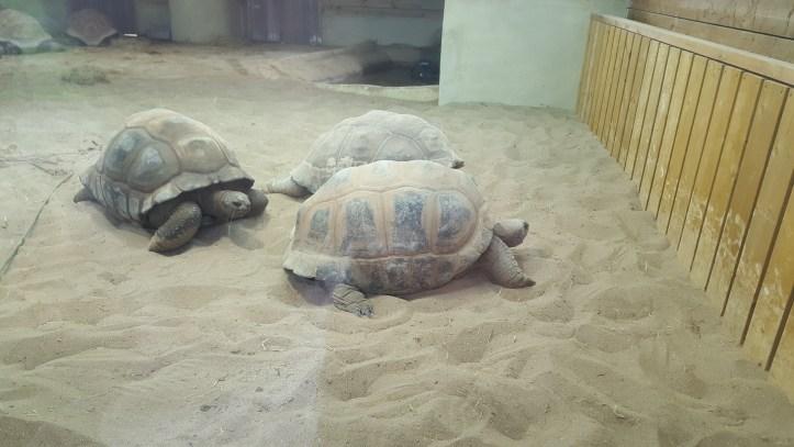 noahs ark soo farm bristol christmas giant tortoise