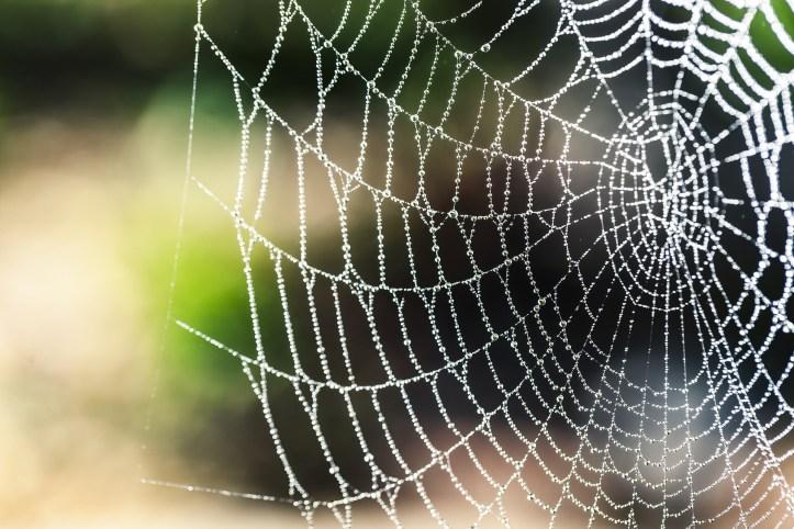 spider webs like websites