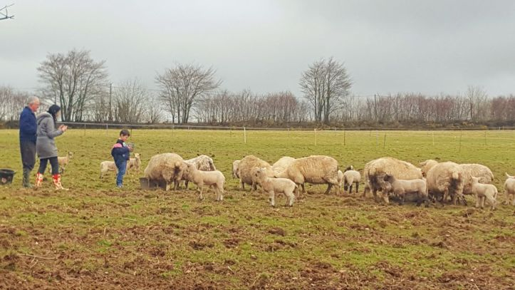 west withy farm cottages in Exmoor Devon perfect for digital detox family holiday feeding lambs