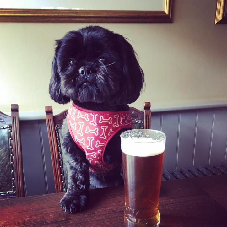 "Visit ""The Victoria"" for a Dog-Friendly Pub Stop"