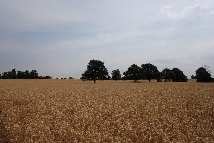 Old Milverton fields warwickshire