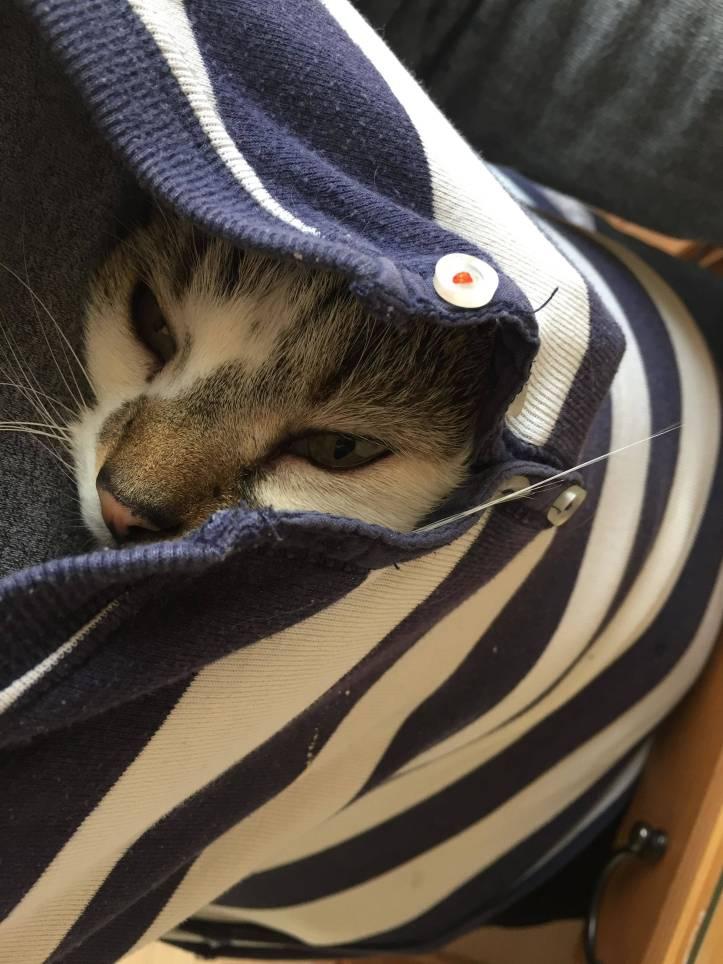 Jerry cat in jumper