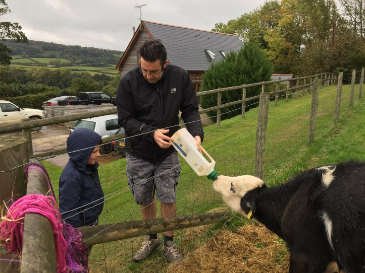 Feeding the animals at Parkers Farm Holiday Cottages & Caravansin Devon - cows