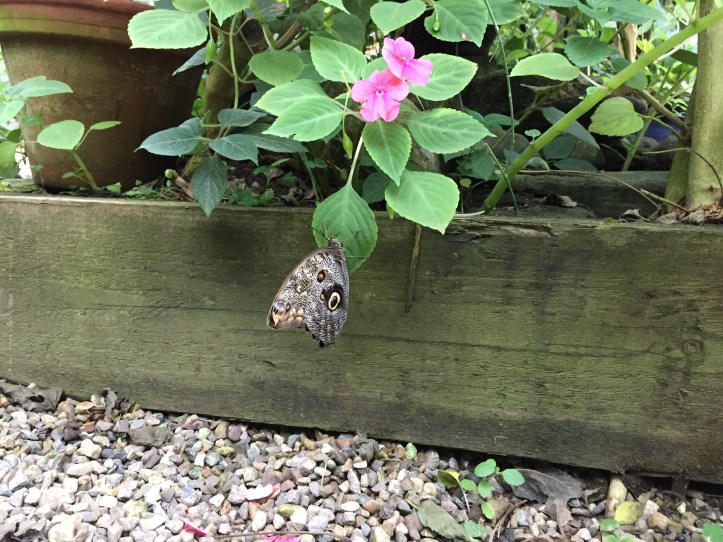 The Butterfly Farm and Otter Sanctuary in Dartmoor - butterflies