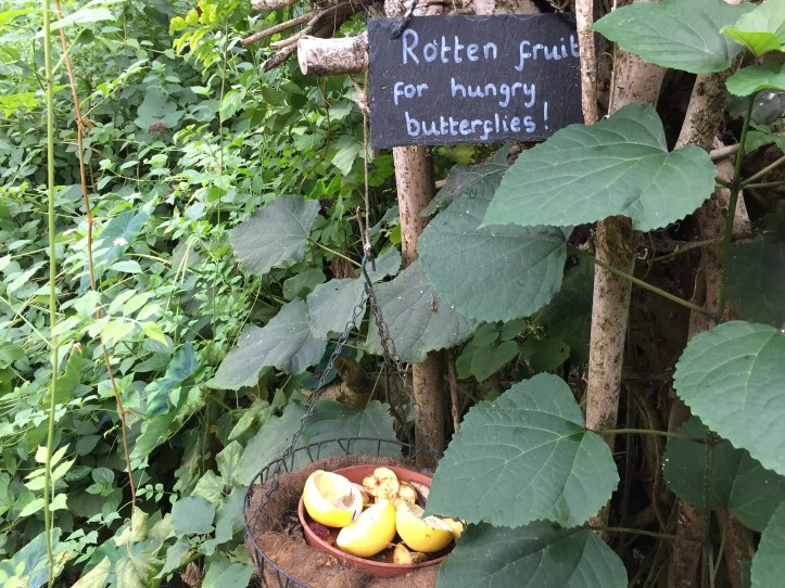Butterfly House - The Butterfly Farm and Otter Sanctuary in Dartmoor