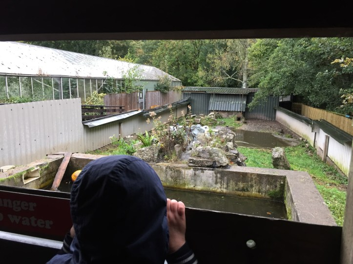 Watching the otter - The Butterfly Farm and Otter Sanctuary in Dartmoor