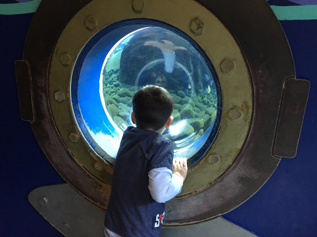 Helf term things to do with kids at Bristol zoo - aquarium