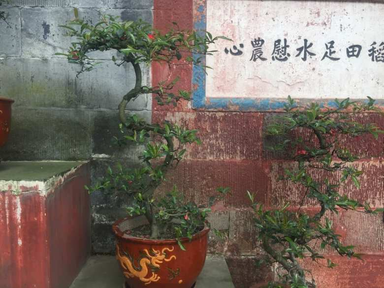 Bonsai at Dujiangyan -Dragons, myth, and minjian (overland asia diary #9)