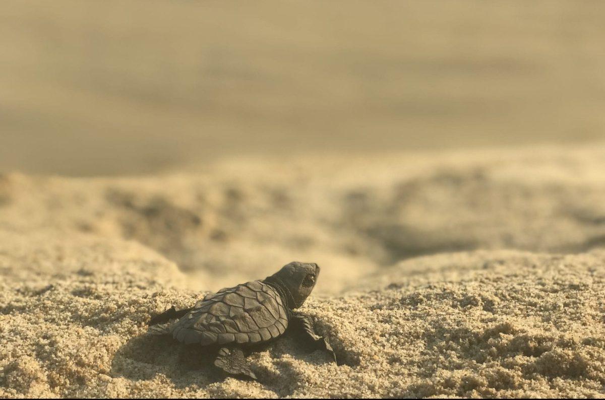 Tiny Turtle at Mazunte Pueblo Mágico