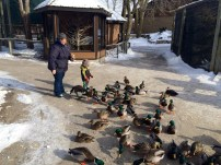 Feeding the ducks, with me trying not to feel panicked by all of the ducks and one large goose.