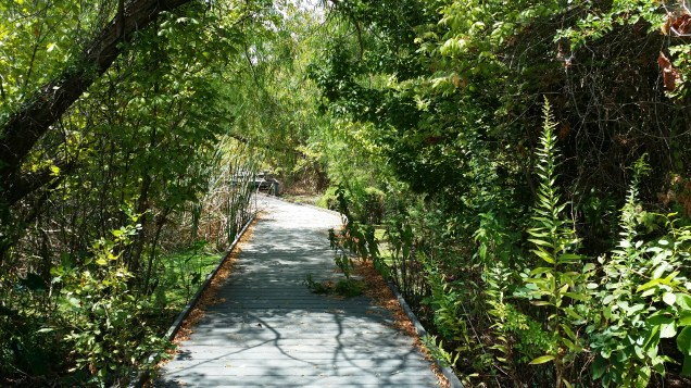 2015-09-04-san-marcos-wetlands-42