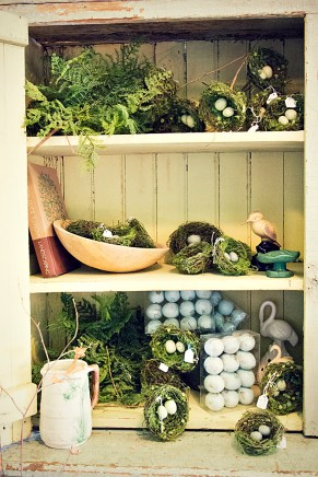 Bird Eggs and Nests