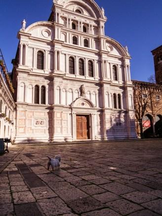 Terrier in Campo San Zaccaria