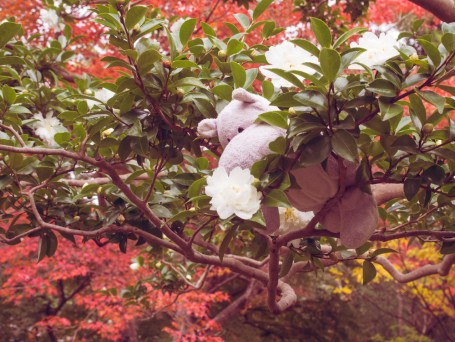 Tiny Hippo in a Tree
