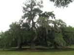 Very cool tree