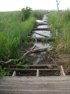 Alligator Marsh boardwalk - destroyed by Hurricane Issac