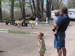 Pronghorn Antelope pay us a Visit.