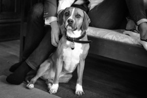 black and white portrait of a dog, Babs Mullinax, me and grace, me & grace, Fort Wayne photographer, photo gifts, lifestyle photography, family photos, ideas for family photos, indoor photography, fun family photographer, long-distance family