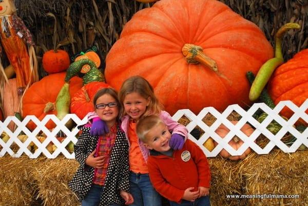 1-#pumpkin patch #corn maze #spooners-003