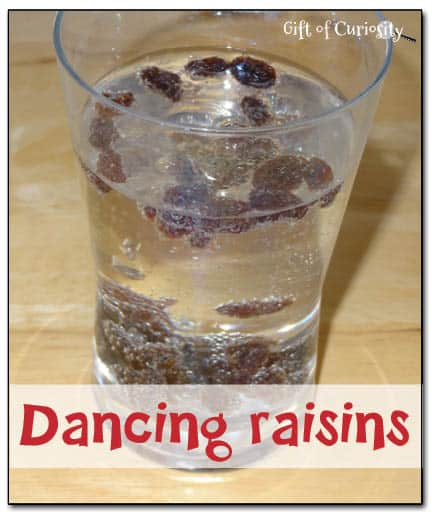 Dancing-raisins-Gift-of-Curiosity