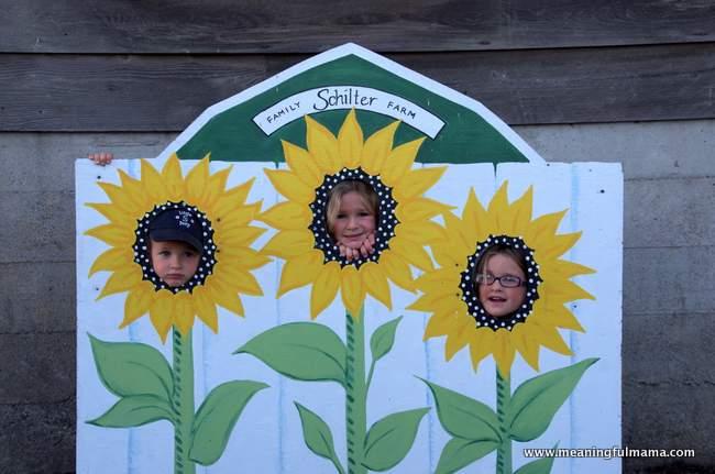 1-pumpkin patch corn maze 2014 schilter farms Oct 4, 2014, 4-014
