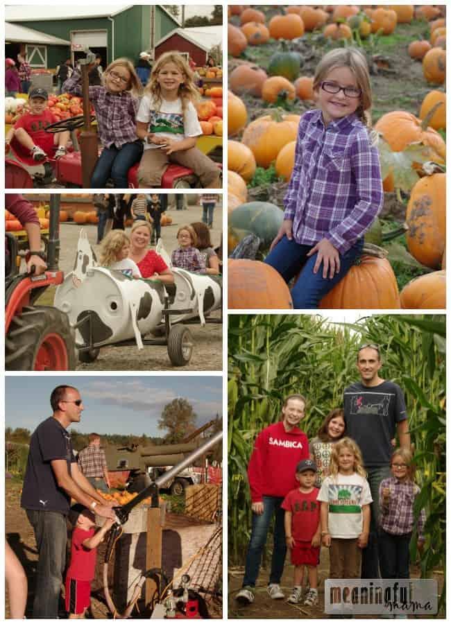 pumpkin patch schilter farms
