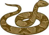 snake jangli janwar