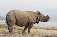 Rhinoceros wild animal