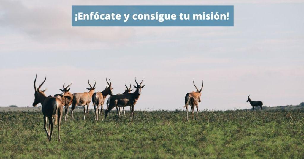 misión de empresa