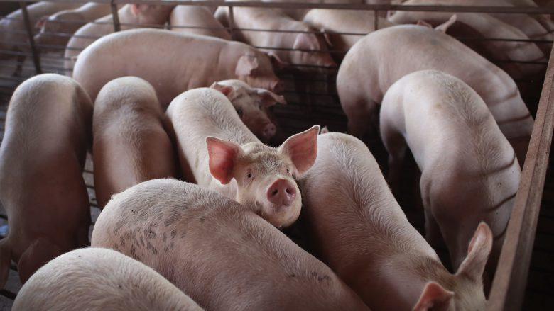 Дефіцит свинини в Китаї оцінюється в 5 мільйонів тонн