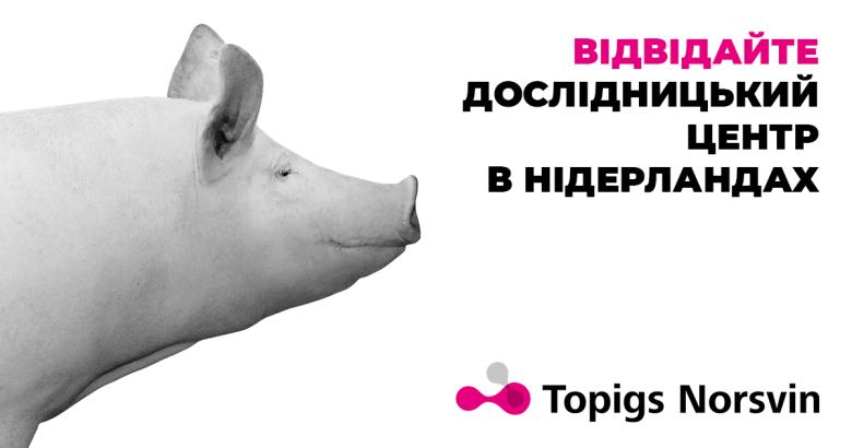 Українських свинарів запрошують відвідати дослідницький центр в Нідерландах