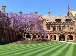 Sydney University courtyard with jacarandah tree flowering