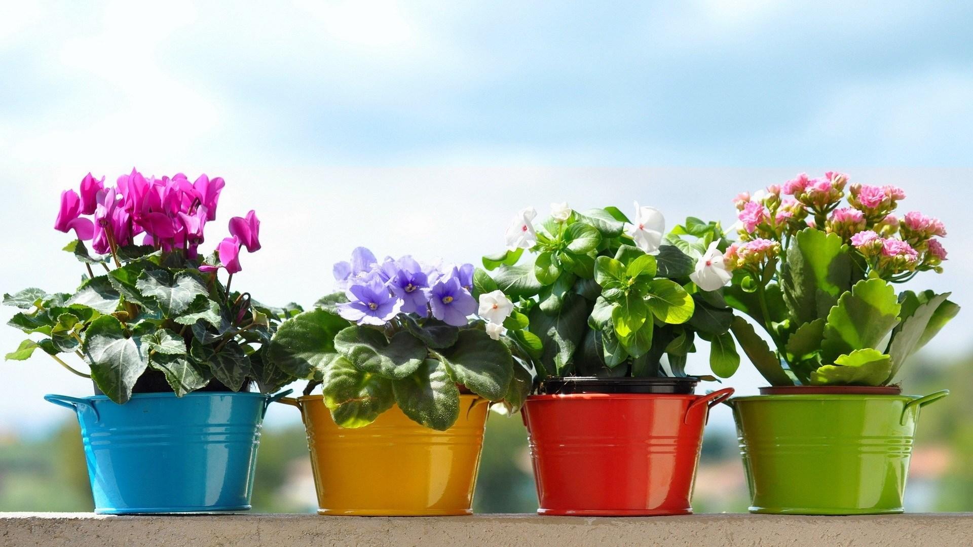 Комнатные цветы