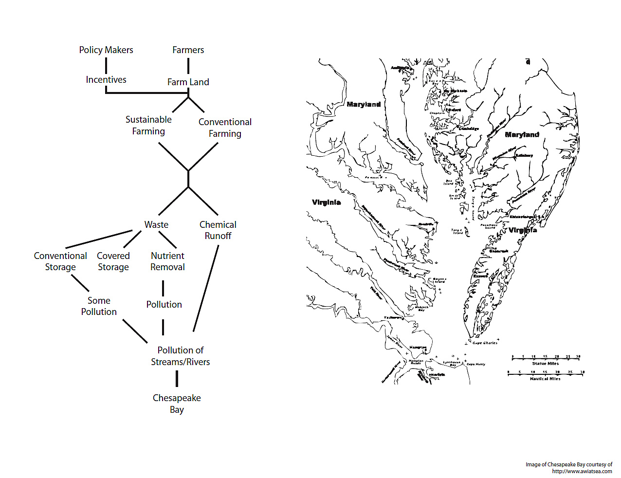 Chesapeake Bay Waterbird Food Web