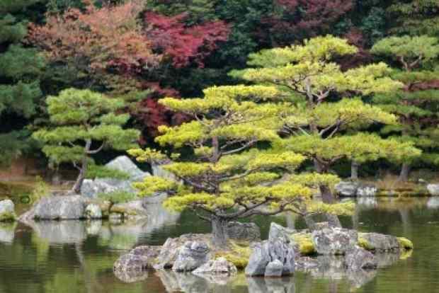 Zen Design Principles