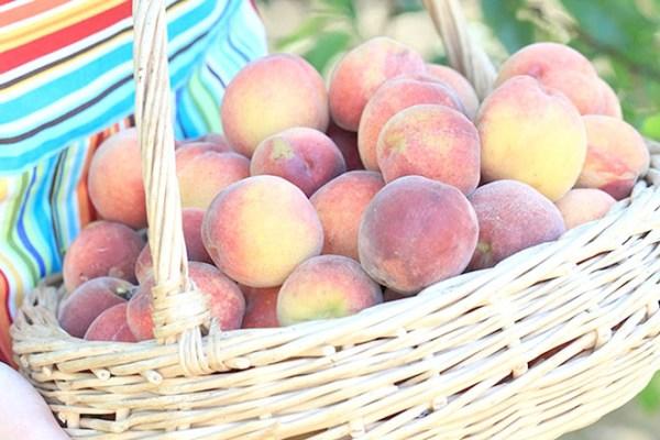 Bà bầu ăn quả đào dễ sẩy thai liệu có đúng?