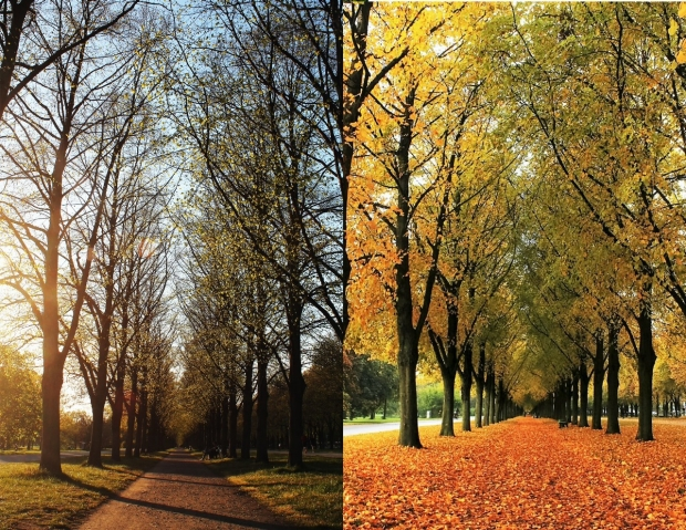 trees in spring and fall
