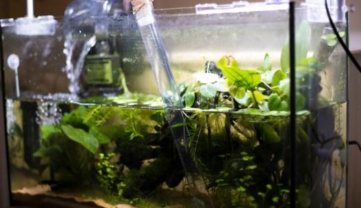 メダカ水槽の水換え
