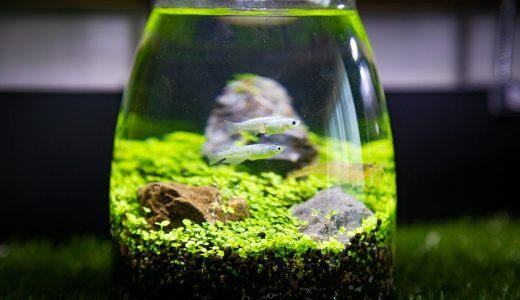 メダカはボトルアクアリムに最適!おすすめの容器や水草も合わせてご紹介
